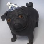 Independent Pug